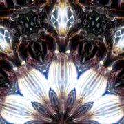 Flower-Light-Vj-Loop-LIMEART_001 VJ Loops Farm - Video Loops & VJ Clips