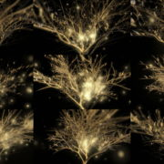 Gilded-Tree-LIMEART-VJ-Loop VJ Loops Farm - Video Loops & VJ Clips