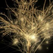 Gilded-Tree-LIMEART-VJ-Loop_007 VJ Loops Farm - Video Loops & VJ Clips