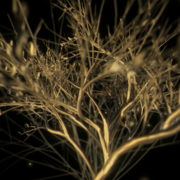 Gilded-Tree-LIMEART-VJ-Loop_009 VJ Loops Farm - Video Loops & VJ Clips