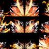 Light-Wings-HD-LIMEART VJ Loops Farm - Video Loops & VJ Clips