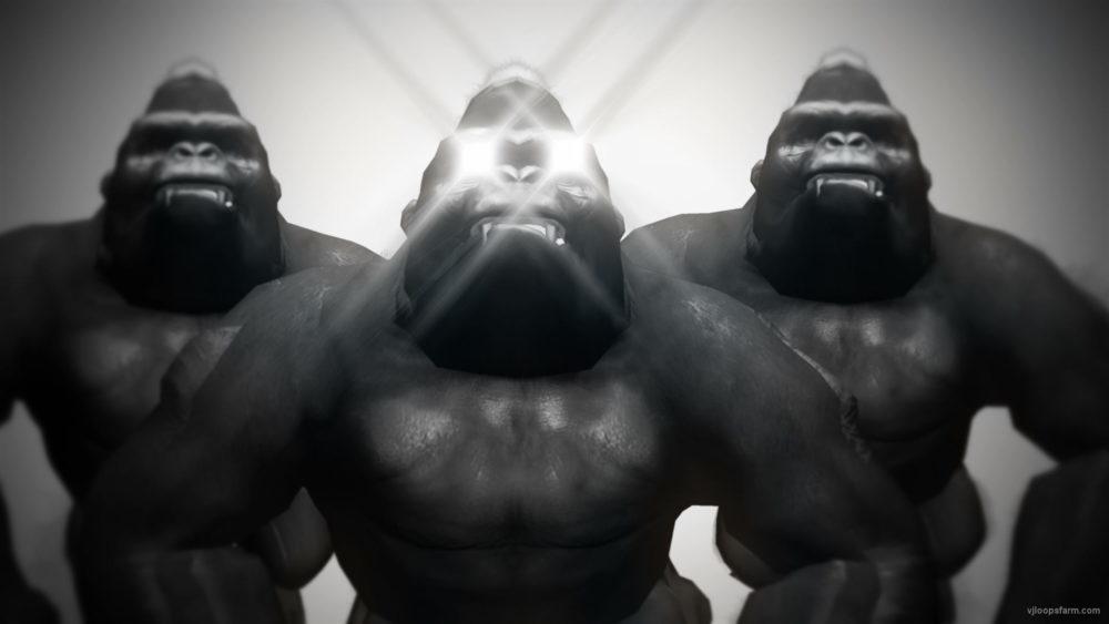 vj video background Gorilla-Brothers-VJ-Loop-LIMEART_003