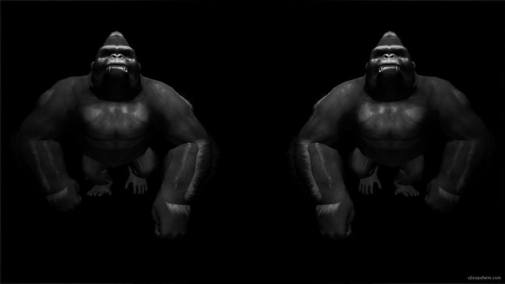 vj video background Gorilla-Double-Bodyguards-Strobe-VJ-Loop-LIMEART_003