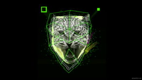 vj video background Green-leopard-facial-animation-effect-on-black-motion-background-vj-loop_003