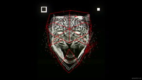 vj video background Orange-leopard-facial-animation-effect-on-black-motion-background-vj-loop_003