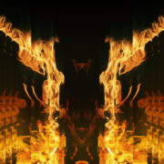 Golden-Phoenix-Fire-Gatee-Flame-Visuals-Video-Art-VJ-Loop_005 VJ Loops Farm