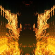 Golden-Phoenix-Fire-Gatee-Flame-Visuals-Video-Art-VJ-Loop_006 VJ Loops Farm