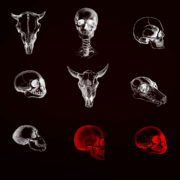 vj video background Animals-Bones-Skull-Texture-pattern-with-red-strobing-effect-VJ-Loop_003