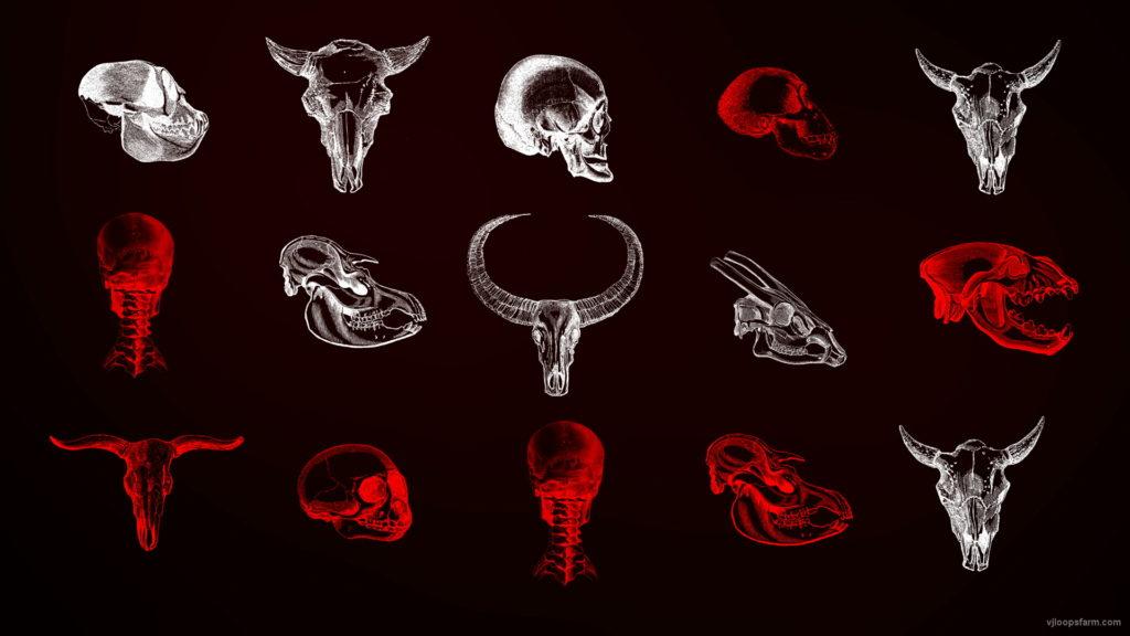 Animals-Bones-Skull-Texture-pattern-with-red-strobing-effect-VJ-Loop_005 VJ Loops Farm