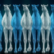 Camel-Team-Full-Size-3D-Blue-Glow-Animal-Video-Art-VJ-Loop_001 VJ Loops Farm