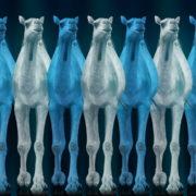 Camel-Team-Full-Size-3D-Blue-Glow-Animal-Video-Art-VJ-Loop_002 VJ Loops Farm