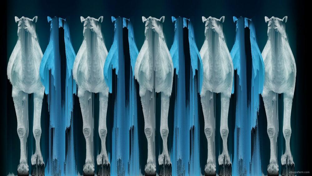vj video background Camel-Team-Full-Size-3D-Blue-Glow-Animal-Video-Art-VJ-Loop_003