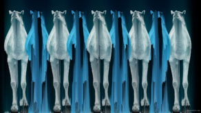 vj video background Camel-Team-Full-Size-3D-Blue-Glow-Animal-Video-Art-VJ-Loop_003