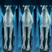 Camel-Team-Full-Size-3D-Blue-Glow-Animal-Video-Art-VJ-Loop_004 VJ Loops Farm