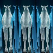 Camel-Team-Full-Size-3D-Blue-Glow-Animal-Video-Art-VJ-Loop_005 VJ Loops Farm