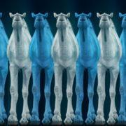 Camel-Team-Full-Size-3D-Blue-Glow-Animal-Video-Art-VJ-Loop_006 VJ Loops Farm
