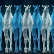 Camel-Team-Full-Size-3D-Blue-Glow-Animal-Video-Art-VJ-Loop_007 VJ Loops Farm