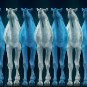 Camel-Team-Full-Size-3D-Blue-Glow-Animal-Video-Art-VJ-Loop_008 VJ Loops Farm