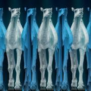 Camel-Team-Full-Size-3D-Blue-Glow-Animal-Video-Art-VJ-Loop_009 VJ Loops Farm
