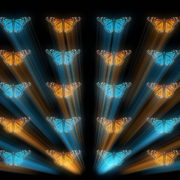 Butterflies-Dual-Color-Rays-insects-pattern-4K-Video-Art-VJ-Loop_002 VJ Loops Farm