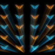 Butterflies-Dual-Color-Rays-insects-pattern-4K-Video-Art-VJ-Loop_004 VJ Loops Farm