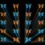 Butterflies-Dual-Color-Rays-insects-pattern-4K-Video-Art-VJ-Loop_005 VJ Loops Farm