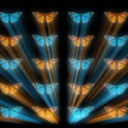 Butterflies-Dual-Color-Rays-insects-pattern-4K-Video-Art-VJ-Loop_007 VJ Loops Farm
