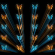 Butterflies-Dual-Color-Rays-insects-pattern-4K-Video-Art-VJ-Loop_008 VJ Loops Farm
