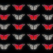 Butterflies-Dual-Color-Red-White-insects-pattern-4K-Video-Art-VJ-Loop_002 VJ Loops Farm