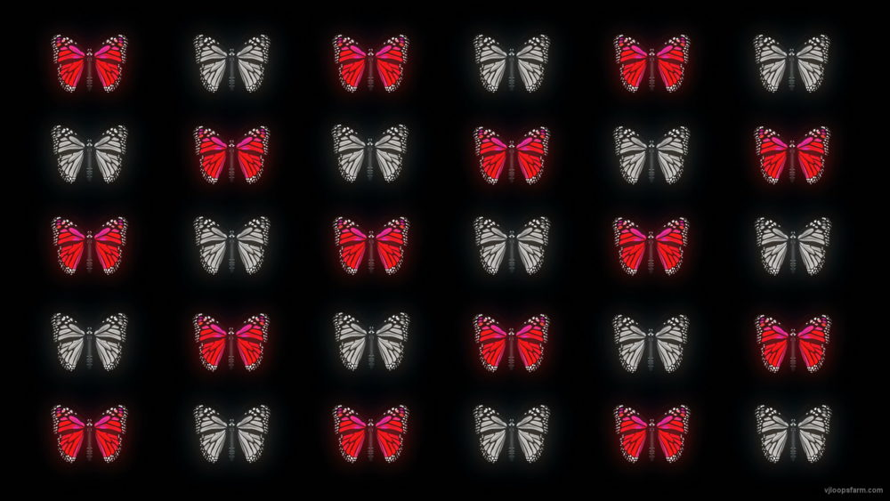 vj video background Butterflies-Dual-Color-Red-White-insects-pattern-4K-Video-Art-VJ-Loop_003