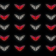 Butterflies-Dual-Color-Red-White-insects-pattern-4K-Video-Art-VJ-Loop_004 VJ Loops Farm