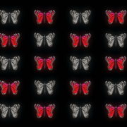 Butterflies-Dual-Color-Red-White-insects-pattern-4K-Video-Art-VJ-Loop_005 VJ Loops Farm