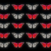 Butterflies-Dual-Color-Red-White-insects-pattern-4K-Video-Art-VJ-Loop_007 VJ Loops Farm