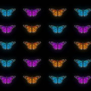 Butterflies-Tri-Color-insects-pattern-4K-Video-Art-VJ-Loop_002 VJ Loops Farm