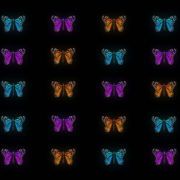 Butterflies-Tri-Color-insects-pattern-4K-Video-Art-VJ-Loop_005 VJ Loops Farm