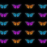 Butterflies-Tri-Color-insects-pattern-4K-Video-Art-VJ-Loop_007 VJ Loops Farm