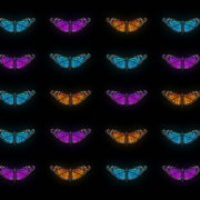 Butterflies-Tri-Color-insects-pattern-4K-Video-Art-VJ-Loop_009 VJ Loops Farm