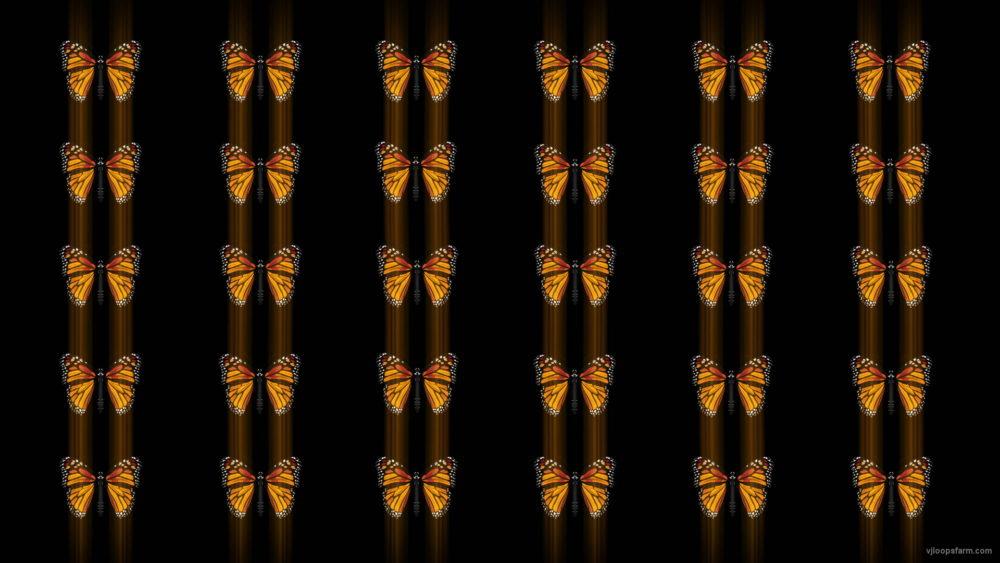 vj video background Butterflies-insects-pattern-4K-Video-Art-VJ-Loop_003