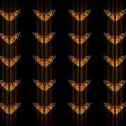 Butterflies-insects-pattern-4K-Video-Art-VJ-Loop_004 VJ Loops Farm