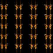 Butterflies-insects-pattern-4K-Video-Art-VJ-Loop_005 VJ Loops Farm