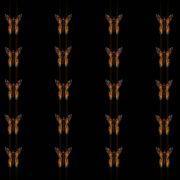 Butterflies-insects-pattern-4K-Video-Art-VJ-Loop_006 VJ Loops Farm