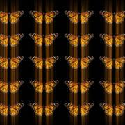 Butterflies-insects-pattern-4K-Video-Art-VJ-Loop_007 VJ Loops Farm