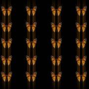Butterflies-insects-pattern-4K-Video-Art-VJ-Loop_008 VJ Loops Farm
