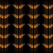 Butterflies-insects-pattern-4K-Video-Art-VJ-Loop_009 VJ Loops Farm