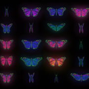 Color-Psychedelic-Butterfly-PSY-random-fly-insects-collection-light-pattern-4K-Video-Art-VJ-Loop_002 VJ Loops Farm