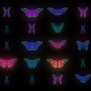 Color-Psychedelic-Butterfly-PSY-random-fly-insects-collection-light-pattern-4K-Video-Art-VJ-Loop_004 VJ Loops Farm