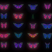 Color-Psychedelic-Butterfly-PSY-random-fly-insects-collection-light-pattern-4K-Video-Art-VJ-Loop_005 VJ Loops Farm