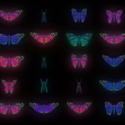 Color-Psychedelic-Butterfly-PSY-random-fly-insects-collection-light-pattern-4K-Video-Art-VJ-Loop_008 VJ Loops Farm