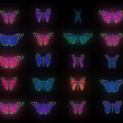 Color-Psychedelic-Butterfly-PSY-random-fly-insects-collection-light-pattern-4K-Video-Art-VJ-Loop_009 VJ Loops Farm