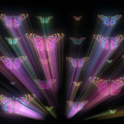 Colorful-Psychedelic-Butterfly-PSY-insects-collection-light-pattern-4K-Video-Art-VJ-Loop_002 VJ Loops Farm